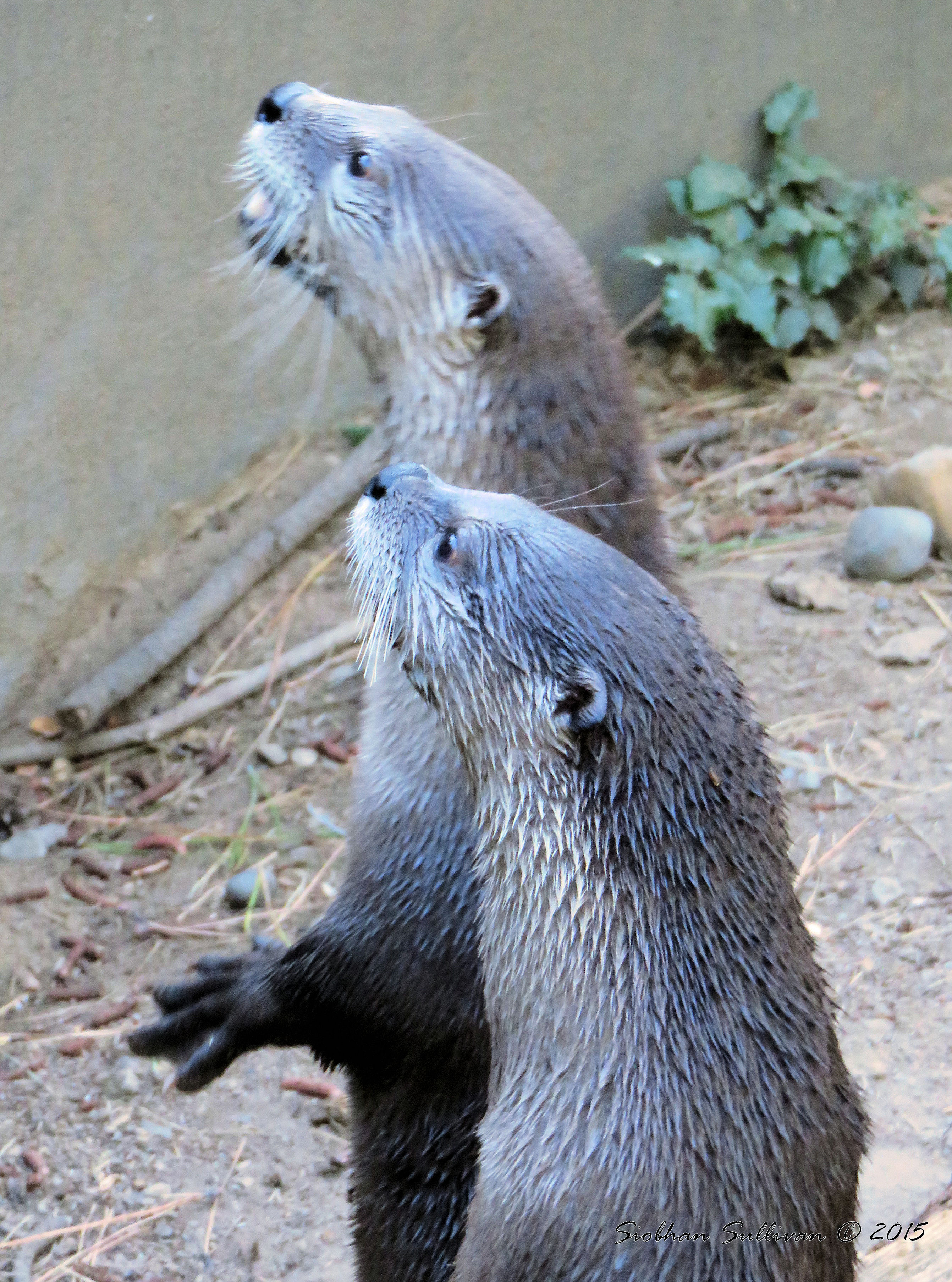 You Otter Know - bend branches